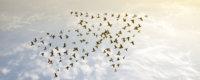 Vögel fliegen in Pfeilformation