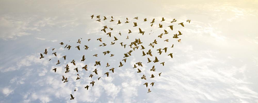 Vögel fliegen in Pfeilformation - Content Marketing